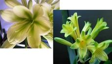 (Hirao Green X TK Original) n X Emararudo Green