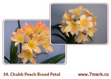 Chubb Peach Broad Petal