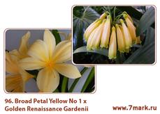 Broad Petal Yellow No 1 Х Golden Renaissance Gardenii