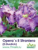 Opera's Il Straniero