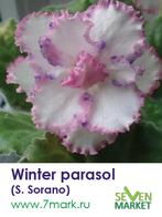 Winter parasol