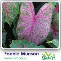 Fannie Munson