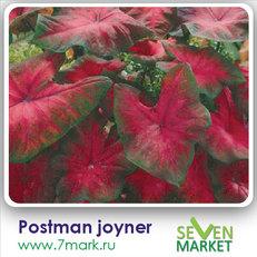 Postman Joyner