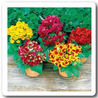 Горшечные и садовые растения